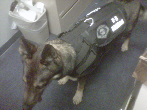 K-9 Armor is proud to protect Anaheim PD K9 Cisko, photo by his partner, Officer Bonczkiewicz