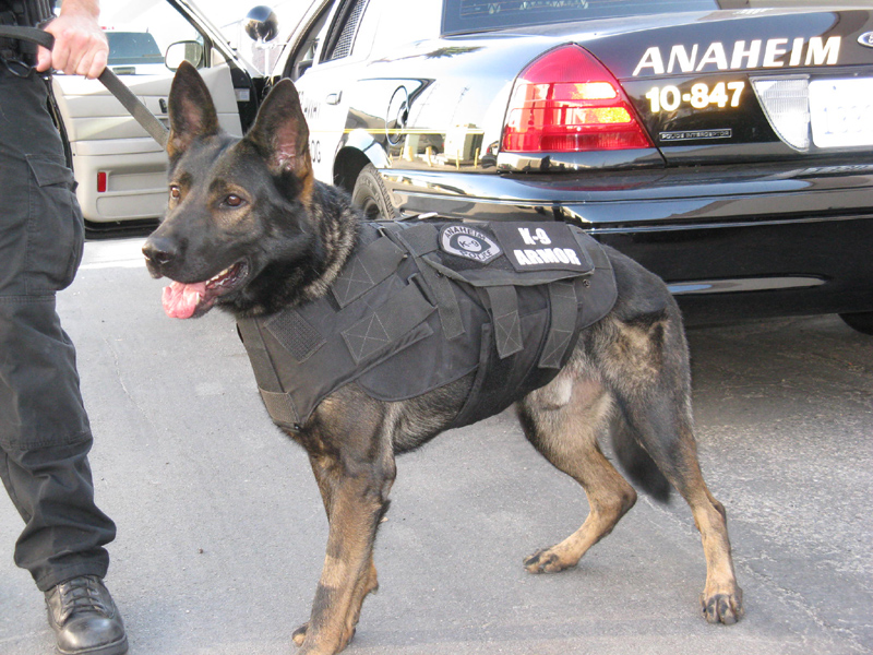 K-9 Armor is proud to protect Anaheim PD K9 Ares
