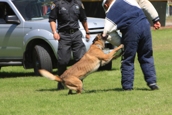 Click for slideshow of the police dogs in action